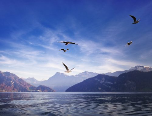 Prisma Freizeit: Starnberger See