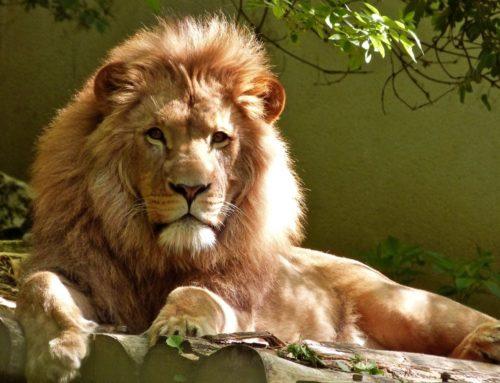 Prisma Freizeit: Tierpark am 25.4.