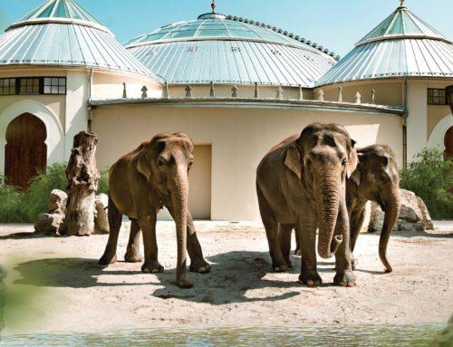 Prisma Freizeit am 24.5.: Tierpark